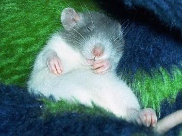 bedding/litter